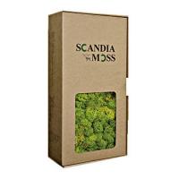 SM(Scandia Moss)ボックス