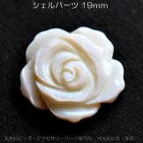 シービーズ・シェルパーツ バラ花彫刻 19mm 厚さ約3.5mm(154413624)
