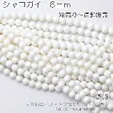 シャコガイ(シャコ貝)6mm  10粒/50粒入連(82639472)