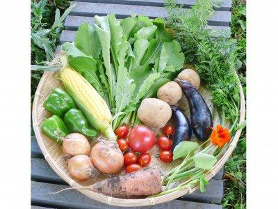 お野菜定期便 Sコース