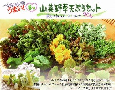 春の山菜野草天ぷらうどんセット