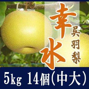 幸水5kg/(中大)14個玉【贈答用】