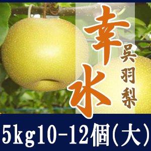 幸水5kg/(大)10-12個玉【贈答用】