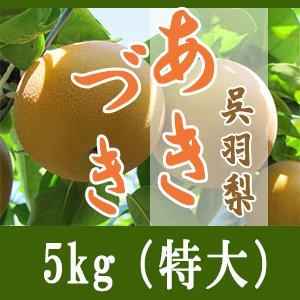 あきづき/5kg(特大)8個-9個入