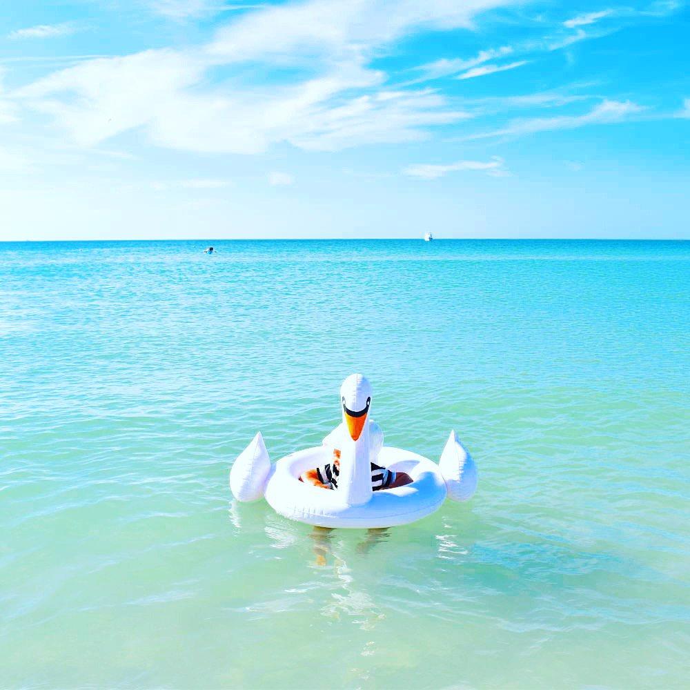 【価格改定】Baby Float Swan img8