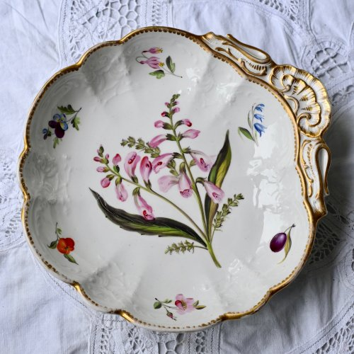 1830年代 コールポート シェル型 稀少ボタニカル画のお菓子皿(2)ピンク色のドラゴンヘッド(送料込)