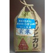 コシヒカリ 玄米