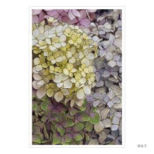 シンジカトウオンライン限定ポストカードコレクション180