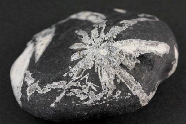 菊花石 原石 140g