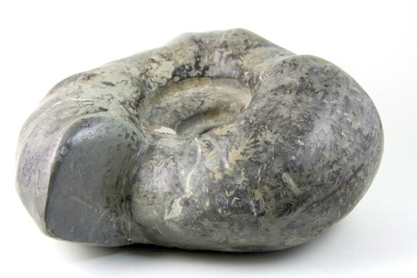 アンモナイト 化石 4.1kg