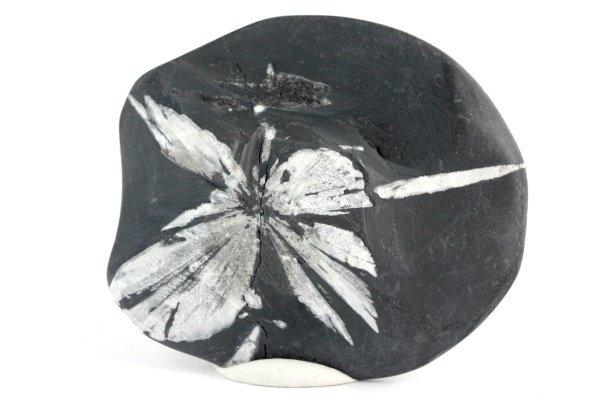菊花石 原石 178g