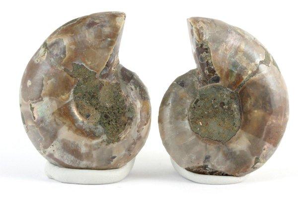 アンモナイト 化石 23g