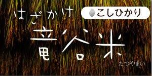 2020年産の竜谷米(たつやまい)【こしひかり5kg】玄米