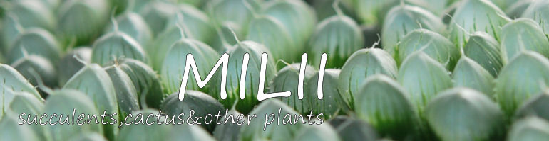多肉植物&サボテン 販売・通販 「 MILII/ミリー 」