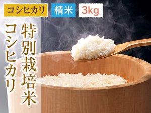 福井県あわら産 特別栽培米コシヒカリ 精米 3kg
