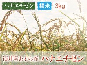 福井県あわら産 ハナエチゼン 精米 3kg