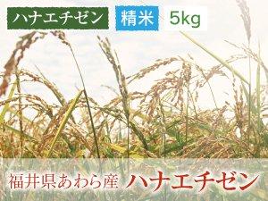 福井県あわら産 ハナエチゼン 精米 5kg