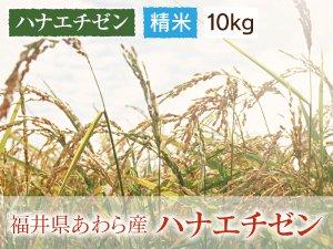 福井県あわら産 ハナエチゼン 精米 10kg