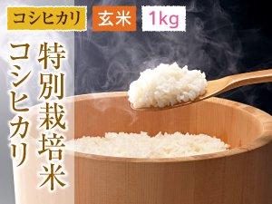 福井県あわら産 特別栽培米コシヒカリ 玄米 1kg