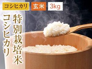 福井県あわら産 特別栽培米コシヒカリ 玄米 3kg
