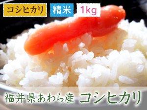 福井県あわら産 コシヒカリ 精米 1kg