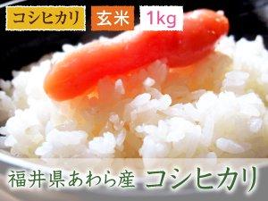 福井県あわら産 コシヒカリ 玄米 1kg