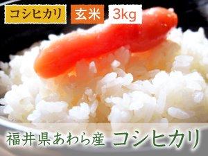福井県あわら産 コシヒカリ 玄米 3kg