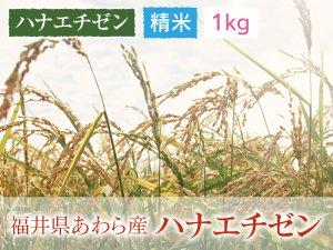 福井県あわら産 ハナエチゼン 精米 1kg