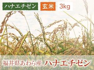 福井県あわら産 ハナエチゼン 玄米 3kg