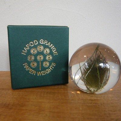 Hafod Grange Paperweights  [Teasel] 3