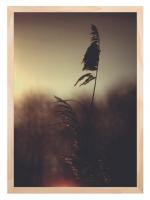 HUMAN EMPIRE   REED GRASS POSTER   A3 ポスターの商品画像