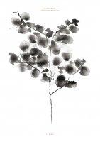 BY GARMI | COTTON PLANT (black) | A3 アートプリント/ポスターの商品画像