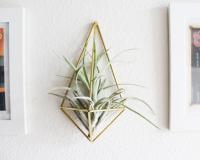 HEMLEVA | THE WALL SCONCE | AIR PLANT HOLDER (壁掛け鉢) | プラントホルダーの商品画像