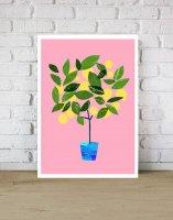ANEK   Meyer Lemon Tree Citrus Poster   アートプリント/ポスター (50x70cm)【北欧 カフェ レストラン インテリア おしゃれ】の商品画像