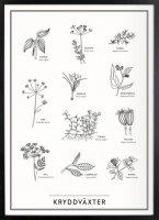 Kunskapstavlan (クンスカップスターブラン) | Spice Plants (ハーブ) | アートプリント/ポスター (30x40cm)の商品画像