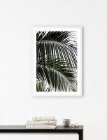 【オーダーメイド】NOUROM | PALM LEAVES #2 | アートプリント/ポスターの商品画像