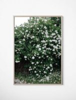 FINE LITTLE DAY | WHITE ROSES POSTER | アートプリント/ポスター (70x100cm)