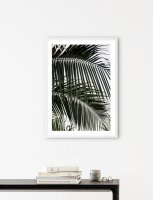 NOUROM | PALM LEAVES #2 | アートプリント/ポスター (50x70cm)の商品画像