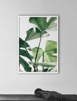NOUROM | MONSTERA #3 | アートプリント/ポスター (50x70cm)【北欧 シンプル ミニマル インテリア おしゃれ】の商品画像