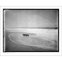 DAN ISAAC WALLIN   MICA & BILLIE   フォトグラフィ/ポスター (40x50cm)