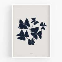 MICUSH | BOTANICAL SILHOUETTE - FALSE SHAMROCK ART PRINT (AP150) | アートプリント/ポスター (30x40cm)