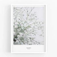 MICUSH | GYPSOPHILA PHOTOGRAPHY PRINT (AP080) | アートプリント/ポスター (30x40cm)の商品画像