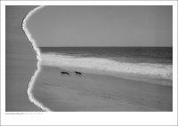 DAN ISAAC WALLIN | MICA AND BILLIE 61 | フォトグラフィ/ポスター (50x70cm)の商品画像
