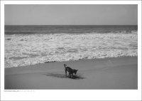 DAN ISAAC WALLIN | MICA AND BILLIE 79 | フォトグラフィ/ポスター (50x70cm)の商品画像