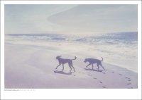 DAN ISAAC WALLIN | MICA AND BILLIE 163 | フォトグラフィ/ポスター (50x70cm)の商品画像