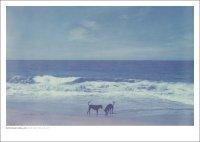 DAN ISAAC WALLIN | MICA AND BILLIE 341 | フォトグラフィ/ポスター (50x70cm)の商品画像