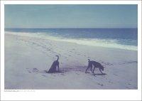 DAN ISAAC WALLIN | MICA AND BILLIE 342 | フォトグラフィ/ポスター (50x70cm)の商品画像