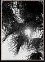 PAPER COLLECTIVE | PALM TREES | アートプリント/アートポスター (50x70cm)【北欧 シンプル インテリア おしゃれ】の商品画像