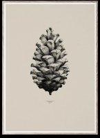 PAPER COLLECTIVE | PINE CONE (sand) | アートプリント/アートポスター (50x70cm)【北欧 シンプル インテリア おしゃれ】の商品画像