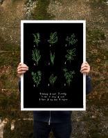 ANEK | BOTANICAL CHART HERBS | アートプリント/ポスター (50x70cm)【北欧 カフェ レストラン インテリア おしゃれ】の商品画像